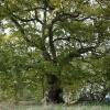 Giornata Nazionale degli Alberi: rami e radici tra natura e memoria