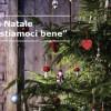 """Campagna """"Compostiamoci bene"""" di IKEA-WWF: restituisci l'albero di Natale e dona 2 euro per la riserva di Venzago"""
