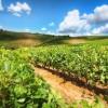 """Agricoltura biologica in espansione nel mondo: una sicurezza alimentare di """"lungo termine"""" secondo ISPRA"""