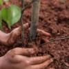 Crèdit Agricole: un albero ogni Mutuo Green. Partono le prime piantumazioni