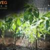 Fruit&Veg System, in fiera a Verona un comparto da 20 miliardi di euro che punta sulla sostenibilità