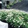 Premio Green Care: 5.000 euro a chi si prende cura di uno spazio verde a Napoli