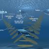 Air-gun, gli spari che danneggiano fauna marina, pesca e turismo. Consegnata la petizione per ricorso al TAR