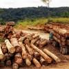 """Conlegno celebra la Giornata Internazionale delle Foreste: """"il legname illegale ha impatti sulla vita quotidiana"""""""