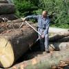ANARF e Federforeste: un protocollo per rilanciare la filiera bosco-legno tra pubblico e privato