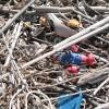 E'possibile riciclare i rifiuti plastici delle spiagge? Dati incoraggianti dal primo studio di settore