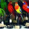 """""""Creativi per natura"""", una primavera partecipata nei Musei del Lazio"""
