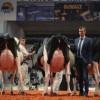 """""""The Milk System"""": Legambiente premia il documentario sulle storture della produzione del latte"""