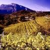 Vendemmia 2099 in anticipo di 4 settimane. In Trentino uno studio indaga l'effetto dei cambiamenti climatici sulla viticoltura