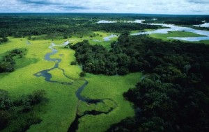 Amazzonia, Courtesy of WWF.it