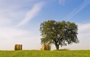 biomasse, erasolare.it