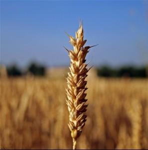Agricoltura, Courtesy of Rogilde, Flickr.com