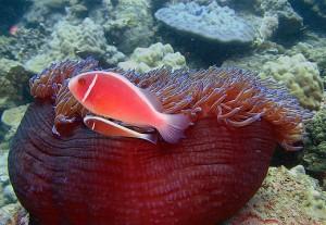 Nha Trang Mpa Fish and Coral, Courtesy of Iucn.org