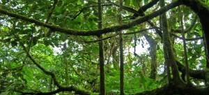 Anno Internazionale delle Foreste, Courtesy of un.org