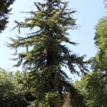sequoia_bologna_villamelloni_fratus_2012