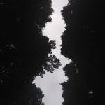 alberi infiniti, Courtesy of Orlando Manfredi