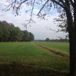 autunno spring media