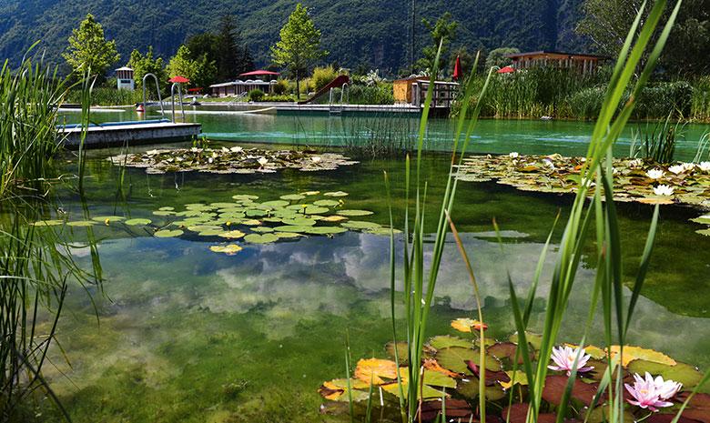 Acqua azzurra no chiara e depurata dalle piante for Piscine laghetto per pesci