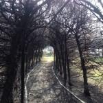 giardino-albero1