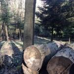 Declivio legna