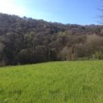 panoramica_Bosco Vaj