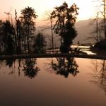 ricefield_yunnan2
