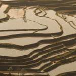 ricefield_yunnan3