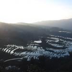ricefield_yunnan4