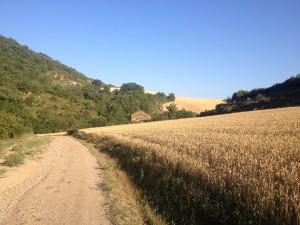 strada con fattoria