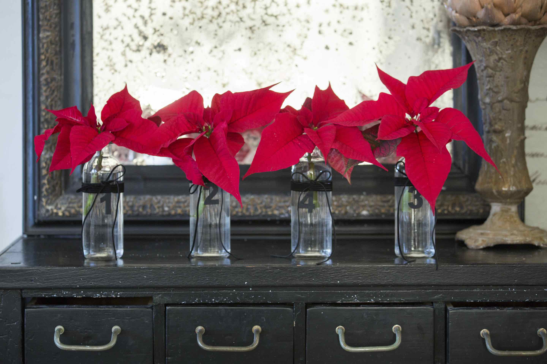 Stella Di Natale Pianta.Stella Di Natale Storia Di Una Pianta Leggendaria Dagli Aztechi Ai